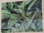 DSC_2447 by Sarah Bernhardt